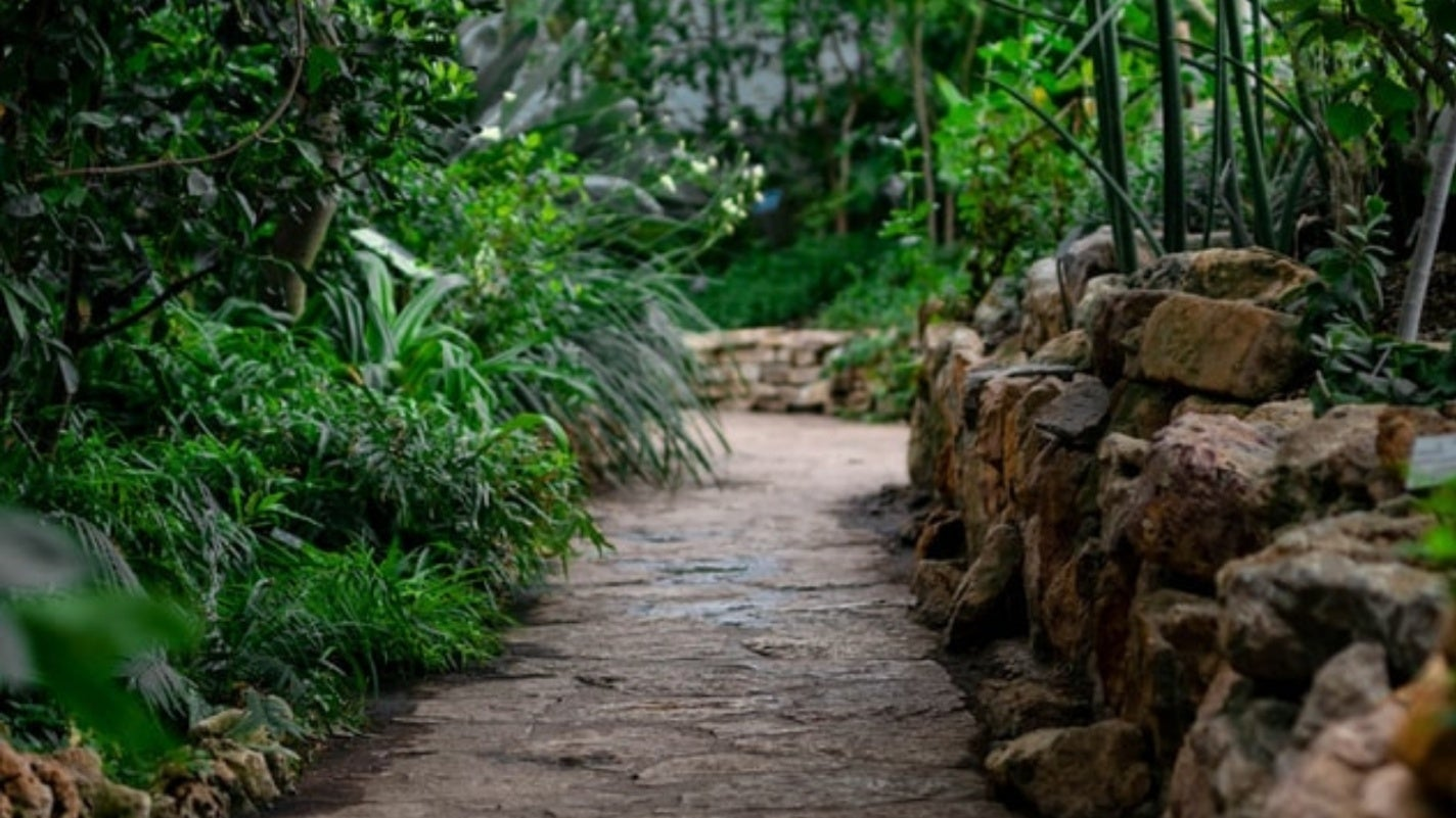 Stone pathway through a shaded garden.