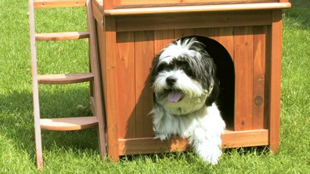 A small dog emerges from a outdoor doghouse with steps to a fenced sun deck on its roof.