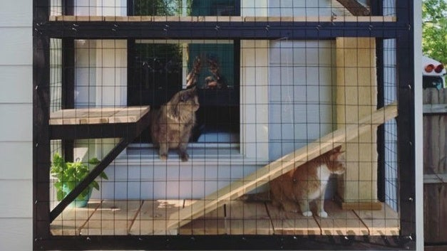 A cat enclosure against a house exterior wall, made out of a mesh cage covering wooden planks for floors and ramps. Two cats sit in the enclosure, one of which is between the enclosure and the adjacent window into the house.