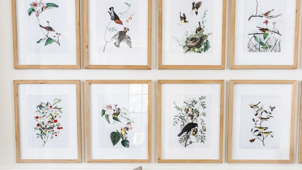 A living room wall covered in 8 framed photos of printed images of birds on various tree and flower branches.