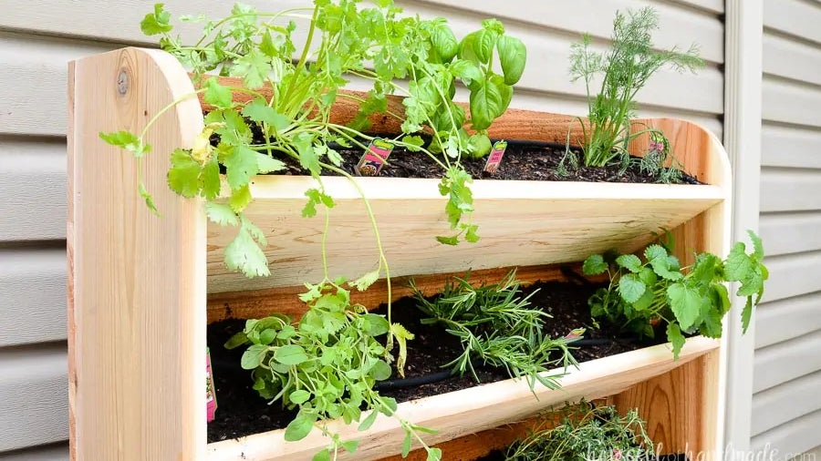 A DIY wooden planter box composed of vertical shelves, each holding soil and a variety of herbs, outside beside a house wall.